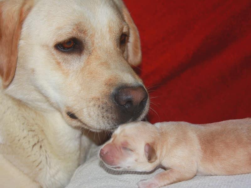 Lola conosce la sua prima cucciola femmina