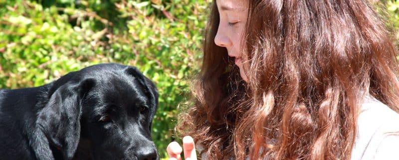 Allevamento Labrador Cuccioli