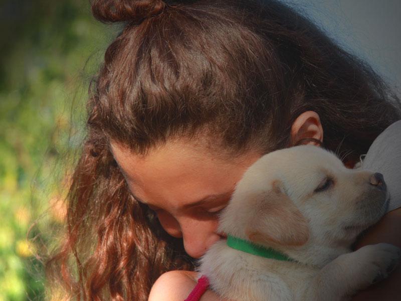 socializzazione cuccioli labrador allevamenti