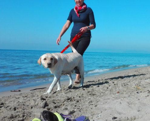 cane labrador vacanza