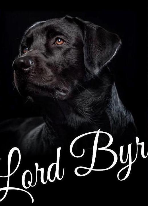 lord Byron labrador nero